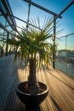 Le palmier se tient sur une terrasse de toit photo libre de droits