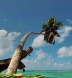 Le palmier supporté a atteint le ciel Photos stock
