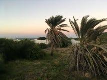Le palmier tunisien sur le ciel bleu de fond Images stock