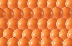 Le pamplemousse entier porte des fruits modèle sans couture abstrait Image libre de droits