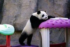 Le panda géant paresseux monte la maison de jouet Photo stock