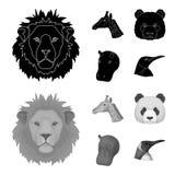 Le panda, girafe, hippopotame, pingouin, les animaux réalistes a placé des icônes de collection dans le noir, symbole de vecteur  images stock