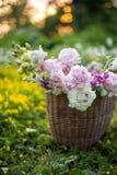 Le panier avec l'été fleurit dans le domaine dans la lumière de coucher du soleil Photos stock