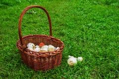Le panier brun avec des champignons de paris sur un fond d'une herbe verte Photos libres de droits