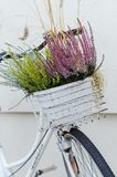 Le panier de la bruyère d'automne fleurit sur le vélo blanc Photos stock