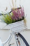Le panier de la bruyère d'automne fleurit sur le vélo blanc Image stock