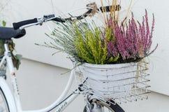 Le panier de la bruyère d'automne fleurit sur le vélo blanc Photographie stock