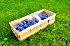 Le panier de prune Photos libres de droits