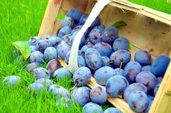 Le panier de prune Photographie stock libre de droits