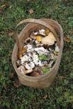Le panier en osier des champignons sauvages se tenant sur l'herbe dans les bois Image stock