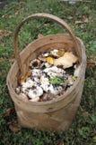 Le panier en osier des champignons sauvages se tenant sur l'herbe dans les bois Photo stock