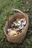 Le panier en osier des champignons sauvages se tenant sur l'herbe dans les bois Photographie stock libre de droits