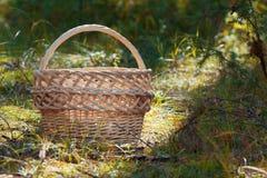 Le panier en osier vide se tenant dans la forêt verte Images libres de droits
