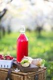 Le panier, les sandwichs, le plaid et le jus dans une floraison font du jardinage Image libre de droits