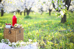 Le panier, les sandwichs, le plaid et le jus dans une floraison font du jardinage Images libres de droits