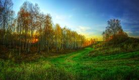 Le panorama de HDR de la forêt tardive d'or d'automne Image stock