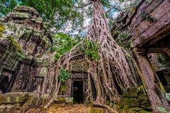 Le panorama de la porte et de l'arbre en pierre antiques s'enracine, merci le temple r de Prohm Photos stock
