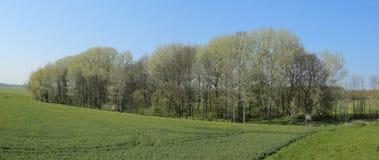 Le panorama de Wuestung Spiegelsdorf et graine de colza mettent en place dans Mecklenburg-Vorpommern Le village a été abandonné i Images libres de droits