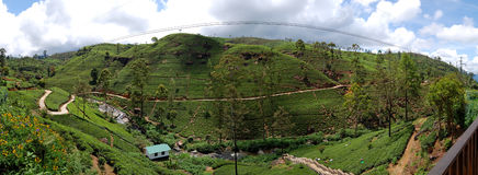 Le panorama des plantations de thé dans Nuwara Eliya Photo libre de droits