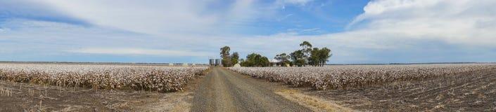 Le panorama du coton met en place prêt pour moissonner dans l'Australie Photo libre de droits