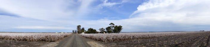 Le panorama du coton met en place prêt pour moissonner dans l'Australie Photos stock
