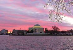 Le panorama urbain avec Thomas Jefferson Memorial et le capitol des USA au lever de soleil pendant les fleurs de cerisier assaiso Images libres de droits