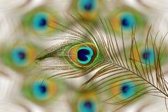 Le paon fait varier le pas à l'arrière-plan de taches floues avec l'espace de copie des textes Images stock