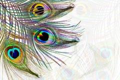 Le paon fait varier le pas à l'arrière-plan de taches floues avec l'espace de copie des textes Photos libres de droits