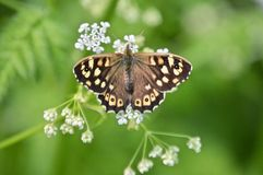 Le papillon est une fleur de vol, la fleur un papillon attaché photos stock