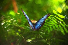 Le papillon féerique Images libres de droits