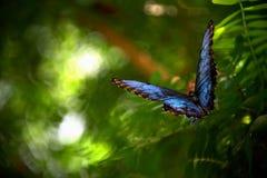 Le papillon féerique Photo stock