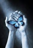 Le papillon remet l'amour de la vie Photographie stock libre de droits