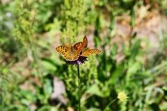 Le papillon se repose sur une fleur dans l'herbe Image stock