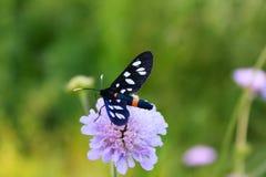Le papillon se repose sur une fleur dans l'herbe Photo stock