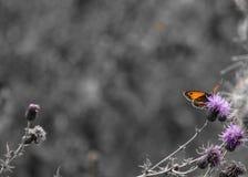 Le papillon se repose sur une fleur rose Images stock