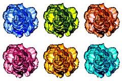 Le paquet d'amour surréaliste coloré de  de Ñ fleurit le macro d'isolement Photographie stock