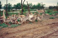 Le paradis de l'oiseau Image libre de droits