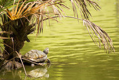 Le paradis de la tortue Photos stock