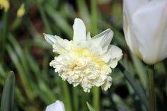 Le paradis Keukenhof de fleur aux Pays-Bas image libre de droits