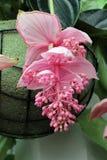 Le paradis Keukenhof de fleur aux Pays-Bas Photos stock