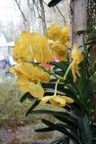 Le paradis Keukenhof de fleur aux Pays-Bas Images stock