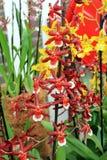 Le paradis Keukenhof de fleur aux Pays-Bas Photo libre de droits