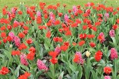 Le paradis Keukenhof de fleur aux Pays-Bas Photos libres de droits