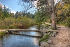 Le parc d'état d'Itasca contient les eaux de plus près de la source du Mississippi Riv photo libre de droits