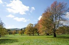 Le parc d'automne avec la cerise Photo stock