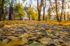 Le parc d'automne, jaunissent les feuilles tombées des arbres, jour ensoleillé photo stock