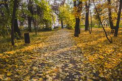 Le parc d'automne, jaunissent les feuilles tombées des arbres, jour ensoleillé photographie stock