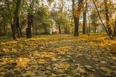 Le parc d'automne, jaunissent les feuilles tombées des arbres, jour ensoleillé image stock