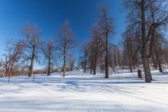 Le parc d'hiver avec la neige photo libre de droits