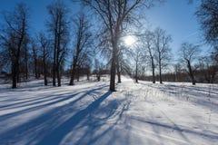 Le parc d'hiver avec la neige photo stock